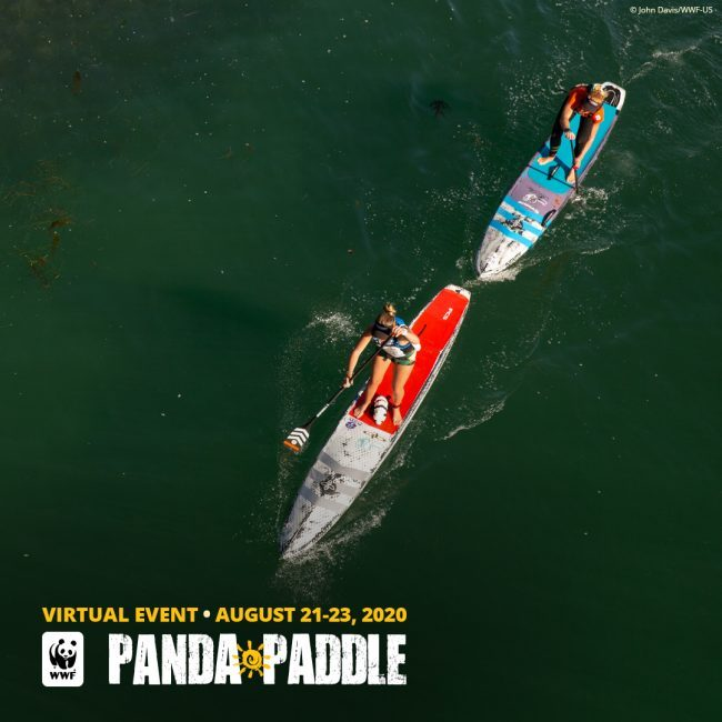 Virtual Panda Paddle 7 World Wildlife Fund Virtual Event